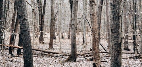 Kostnadsfri bild av bara träd, falla, horisontell