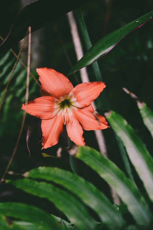 Photo of Red Flower in Bloom