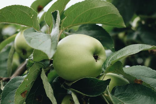 Close-Up Photo Of Green Apple