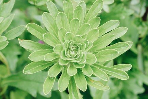 フローラ, ボタニカル, 咲くの無料の写真素材