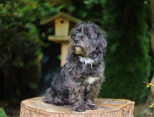 Photo Of Dog Sitting On Top Wood
