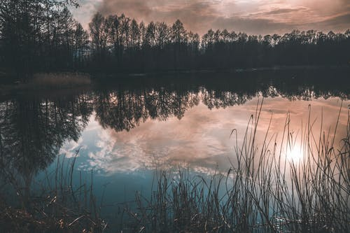 Free stock photo of clouds, forest, lake, reflection