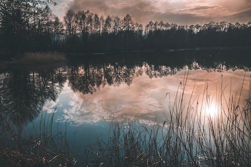 反射, 太阳反射, 森林, 樹木 的 免费素材图片