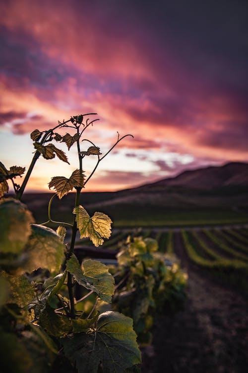 Kostnadsfri bild av blad, falla, fält, gryning