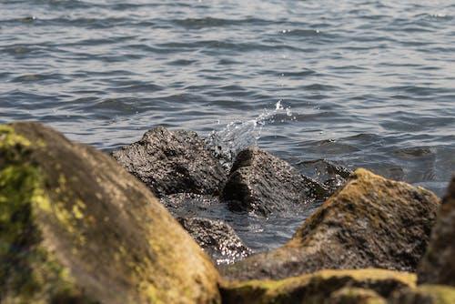 คลังภาพถ่ายฟรี ของ การพักผ่อนหย่อนใจ, คลื่น, ชายทะเล, ชายฝั่ง