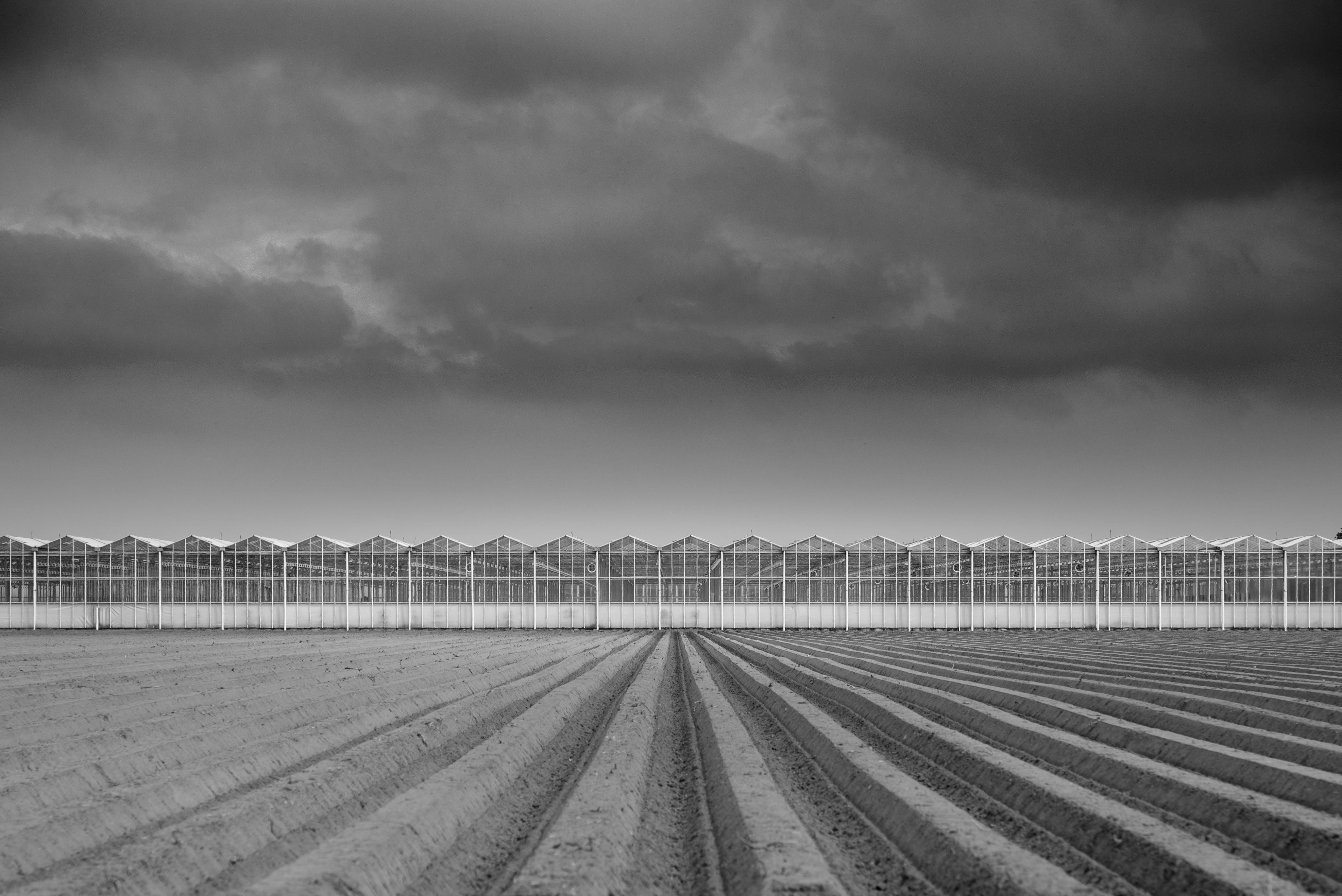 Grayscale Photograph of Farm