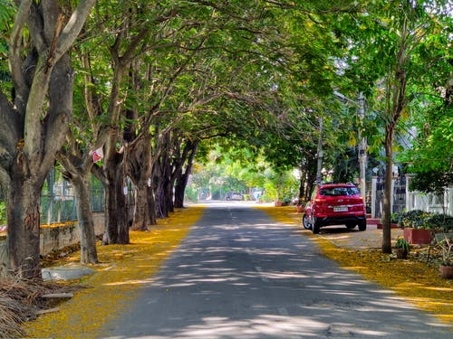 Red Car on Road Near Green Trees