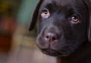 love, animal, dog