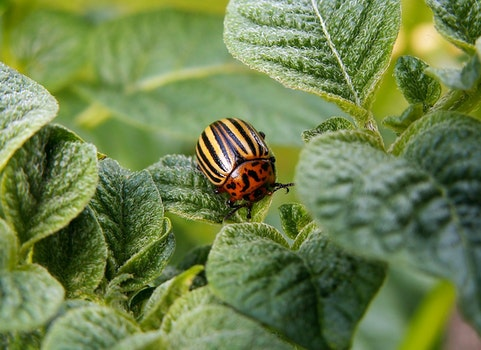 Orange and Yellow Bug on Leaf