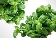 food, healthy, plant