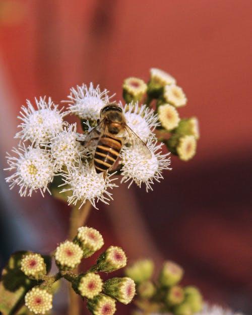 Free stock photo of beautiful, bee, blooming flowers