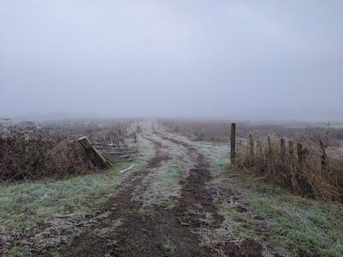 Foto stok gratis agrikultura, anggar, berantakan, berkabut