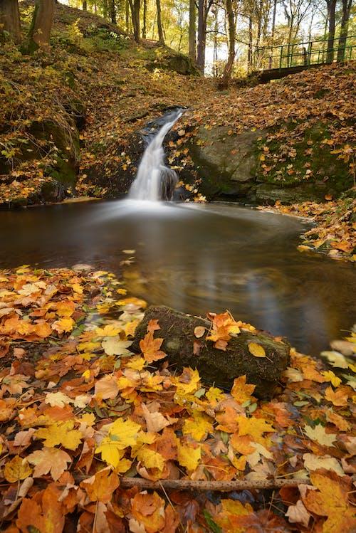 Immagine gratuita di acero, acqua, alberi