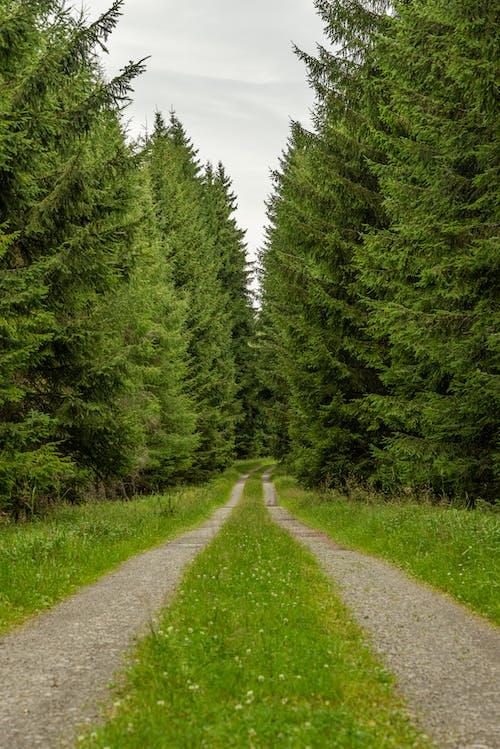 Green Pine Trees on Green Grass Field