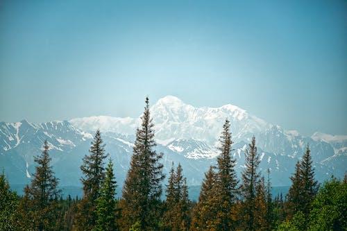 Бесплатное стоковое фото с HD-обои, гора, деревья