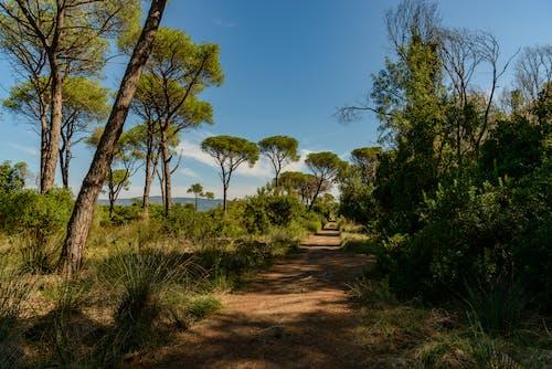 Immagine gratuita di alberi, ambiente, cespuglio