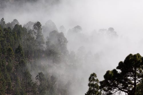 Person Showing Forest Covered in Fog