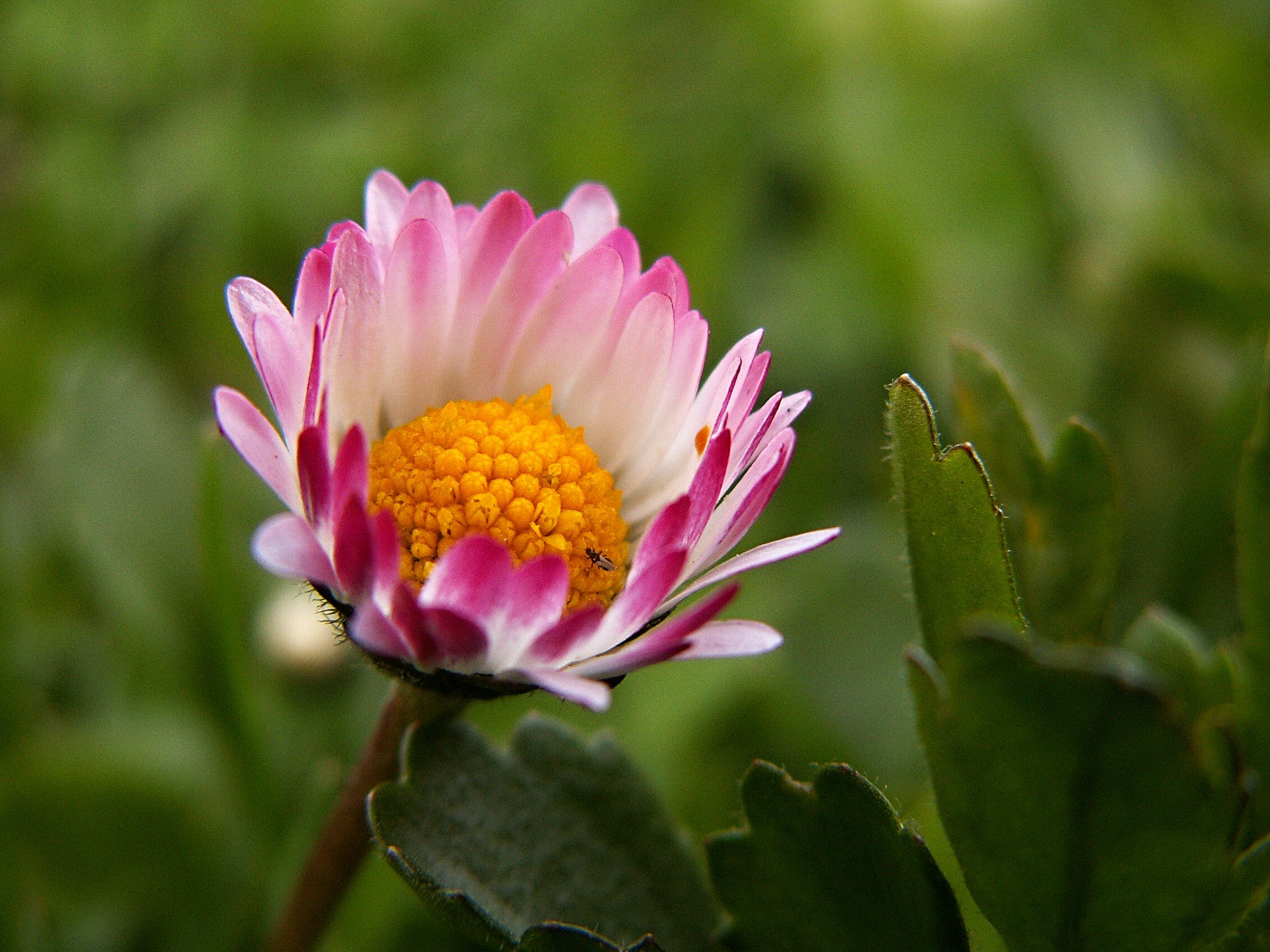 Pink White and Yellow Flower