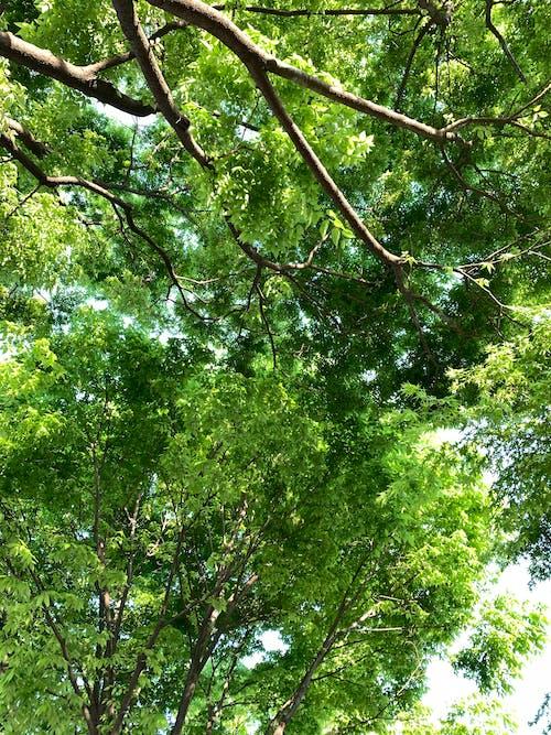 从下面, 低角度, 公園 的 免费素材图片