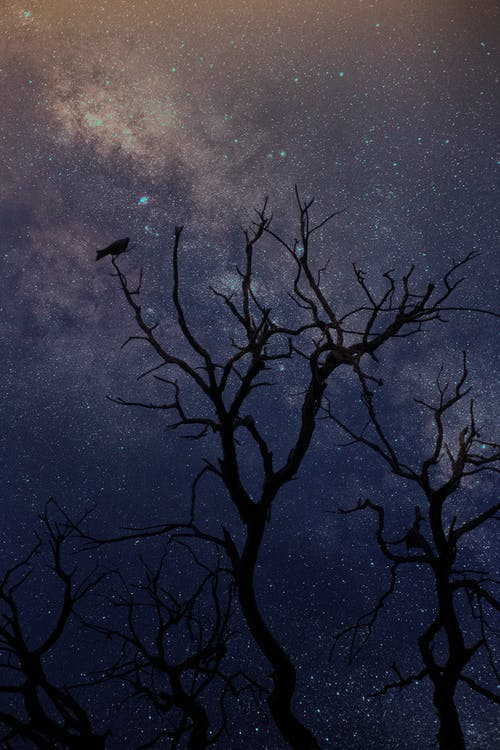 Bare Tree Under Blue Sky With Stars during Night Time