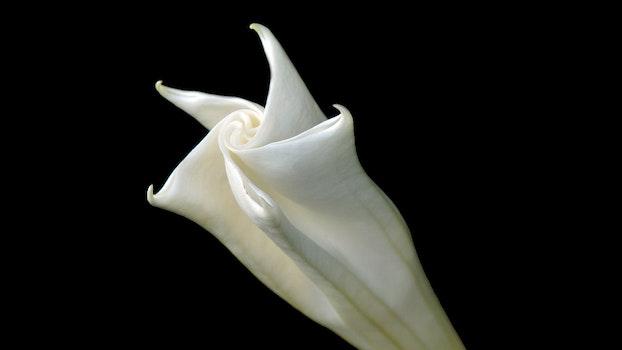 Free stock photo of nature, romantic, white, flower