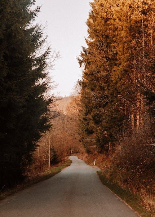 Gratis arkivbilde med brune trær, dagslys, falle, landsbygd