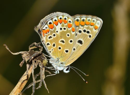 Бесплатное стоковое фото с бабочка, крылья, максросъемка, мотылек