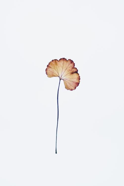 アート, シングル, シンプル, ドライフラワーの無料の写真素材