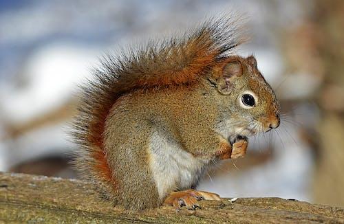 動物, 可愛, 哺乳動物, 囓齒動物 的 免費圖庫相片