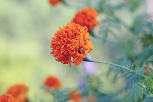 Gratis stockfoto met bloem, bloementuin, close-up, detailopname