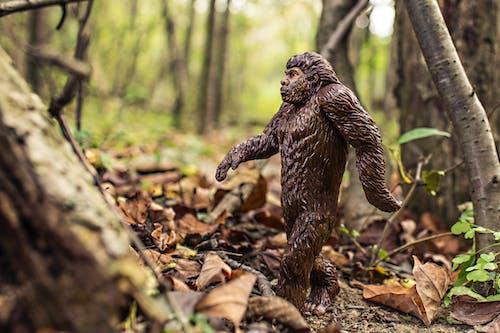 Photos gratuites de animal, bigfoot, chevelu, évolution