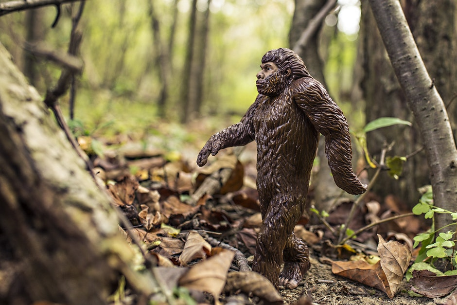 animal, bigfoot, evolution