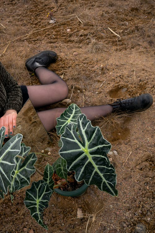 Person in Black Boots Holding Green Leaves