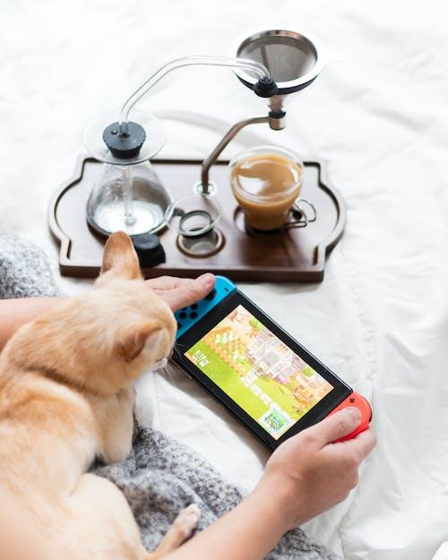 Darmowe zdjęcie z galerii z brązowy pies, czas wolny, drink