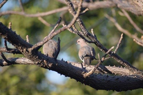 Gray Bird on Brown Tree Branch