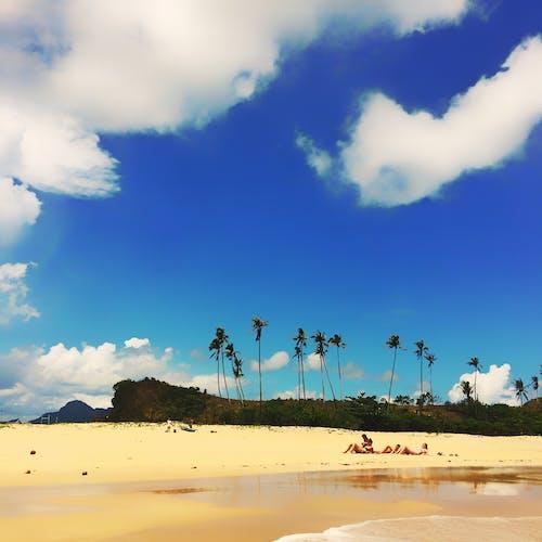 Photos gratuites de arbres, beau, bord de mer, bronzer