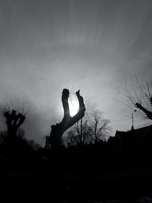 Free stock photo of dead trees, shadow, sun