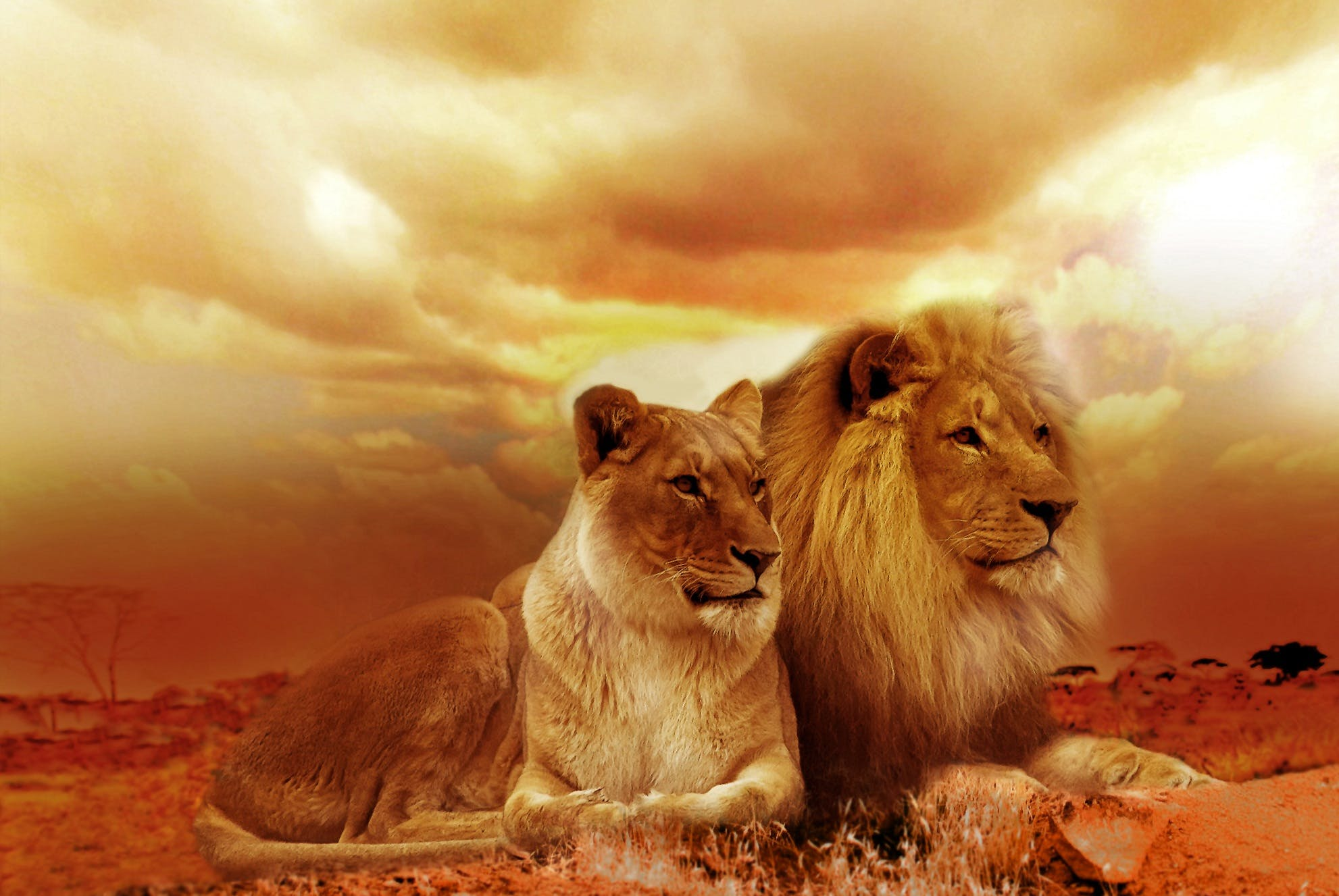 Lion and Lioness Under White Sky during Sunset