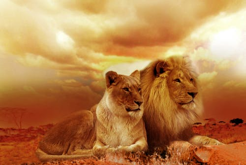 Photos gratuites de afrique, animaux, animaux sauvages, coucher de soleil