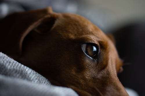 Close-up Shot of a Dog