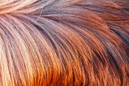Brown and White Hair on White Textile