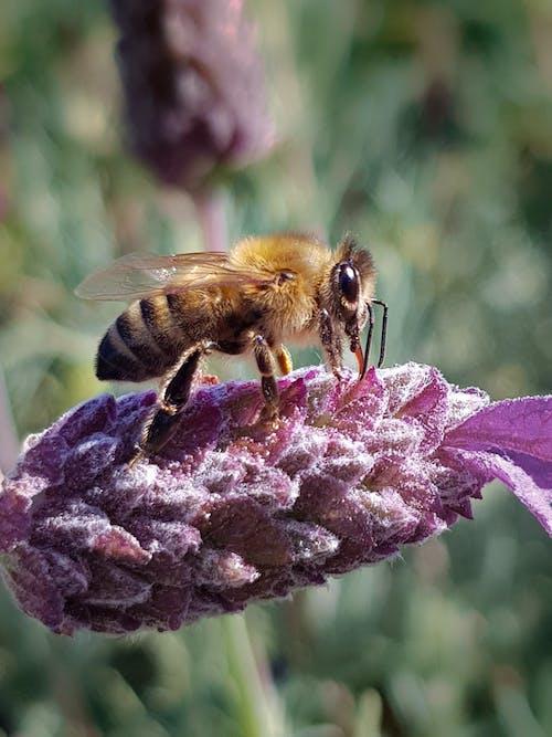 คลังภาพถ่ายฟรี ของ การเกษตร, น้ำผึ้ง, ผึ้ง, ผึ้งมิ้ม