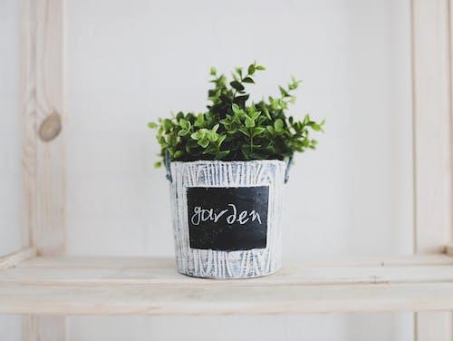 Kostenloses Stock Foto zu dekoration, drinnen, flora