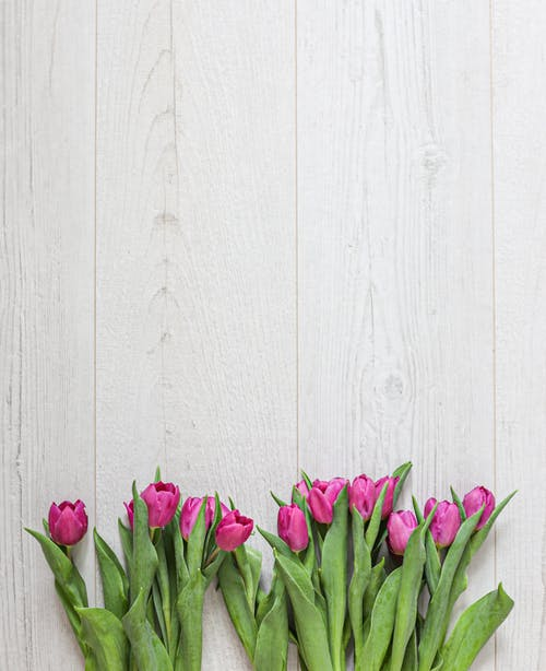 Pink Flowers on White Wooden Wall
