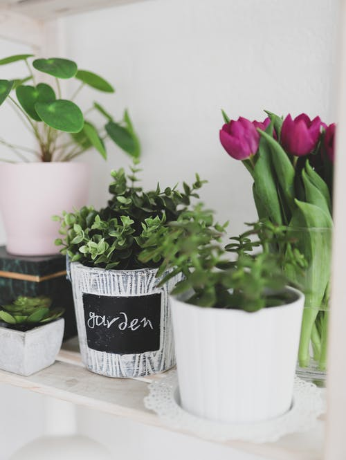 Pink Tulips in White Ceramic Vase