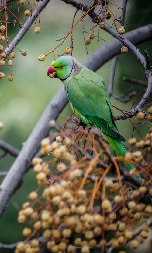 Green Bird on Brown Tree Branch
