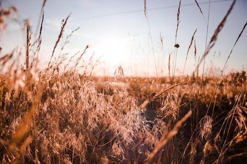 Photos gratuites de aube, automne, campagne, clairière