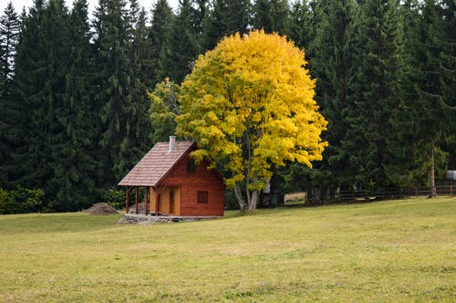 Brown Wooden House Near Yellow Leaf Tree