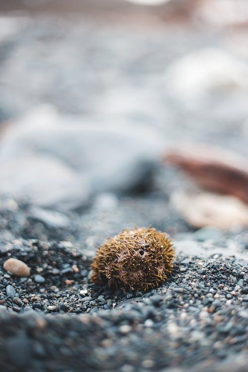 Foto profissional grátis de à beira-mar, agricultura, alimento