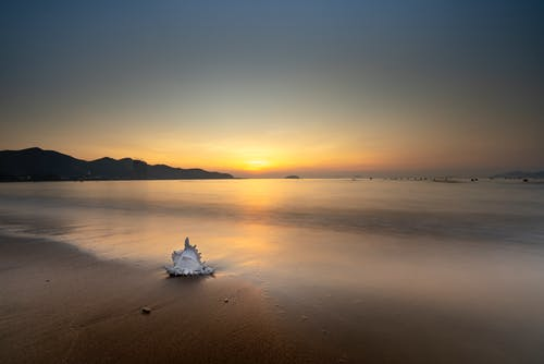 White Seashell on Sea during Sunset